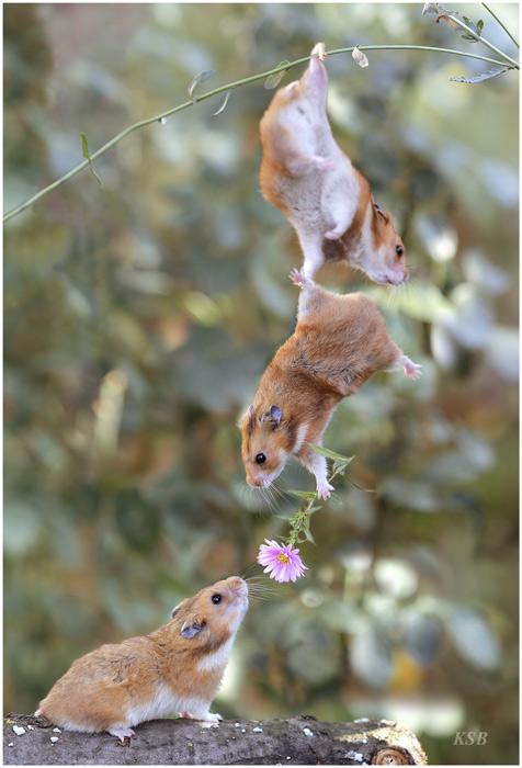 Amicizia e amore